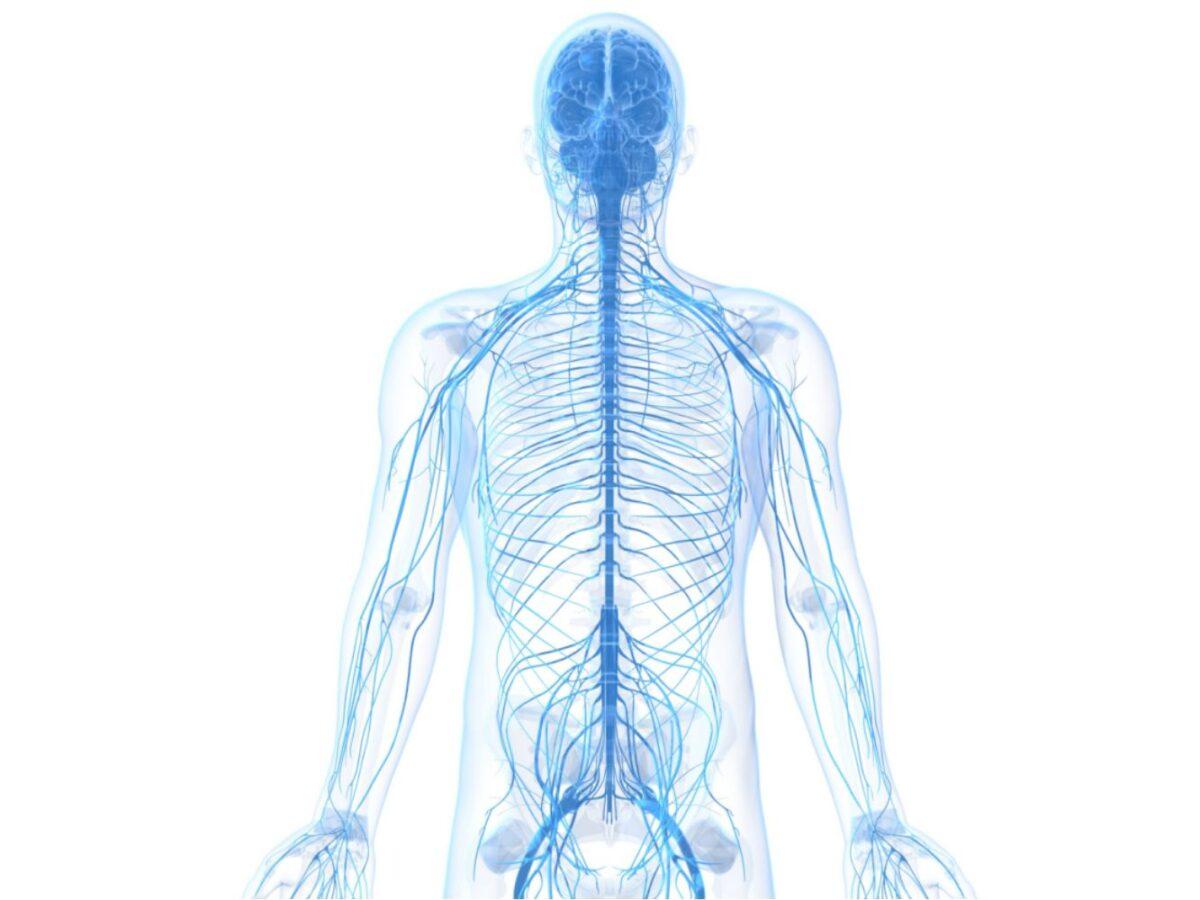 Anatomija kičmene moždine